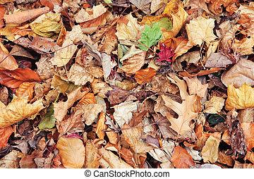 sec, coloré, feuilles, jaune, automne, rouges, automne, érable
