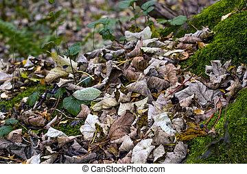 sec, feuilles automne