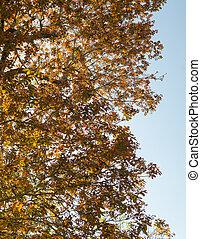 sec, feuilles bleu, ciel, automne