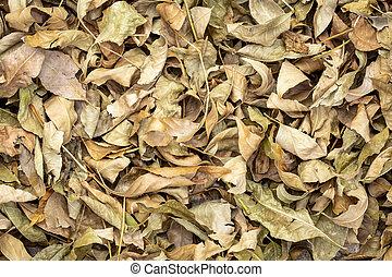 sec, feuilles, coloré, fond, automne