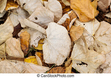 sec, feuilles