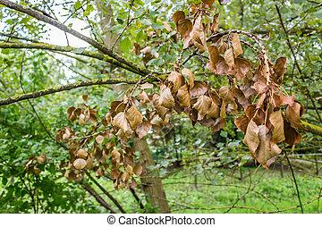 sec, feuilles, lichen, jaune