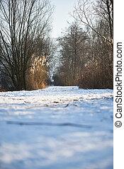 sec, herbe champ, fond, neigeux