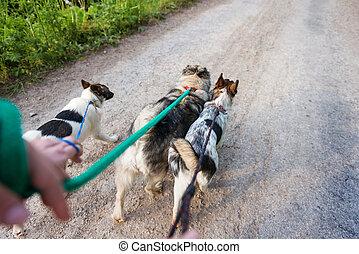 sec, marche, poussiéreux, trois, unrecognizable, chiens,...
