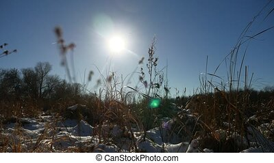 sec, nature hiver, champ neige, herbe, paysage
