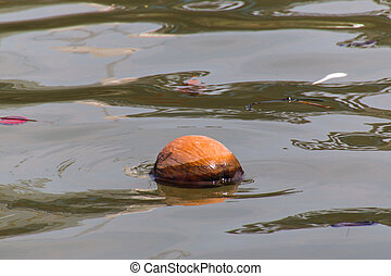 sec, noix coco, flotter, dans, les, rivière