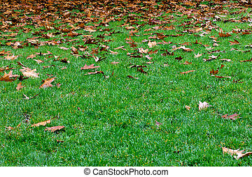 sec, pelouse verte, feuille