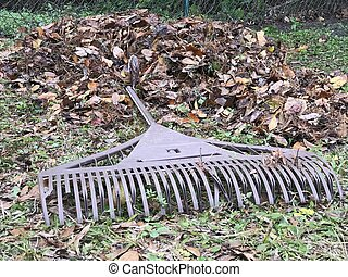 sec, photo, image, râteau, leaves.