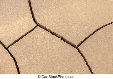 sec, plante, donner, pas, presque, pousse, non, quel, haut, matière, toqué, vert, dead., manière, invisible, par, marques, concept:
