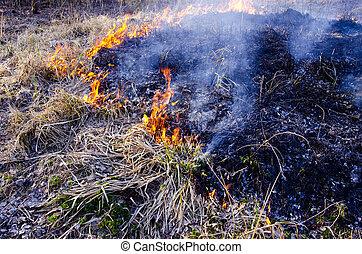 sec, printemps, herbe, brûlé, temps