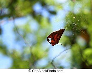 sec, toile, feuilles, araignés