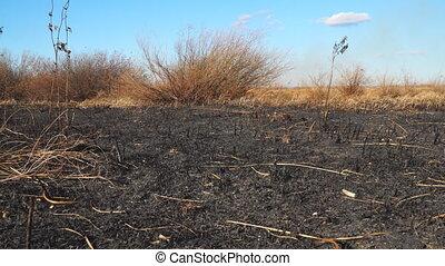 sec, vapeurs, field., herbe, noir, brûlé, pré