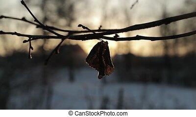 sec, winter., lent, soleil, feuilles, contre, mouvement, clair, vidéo, fond