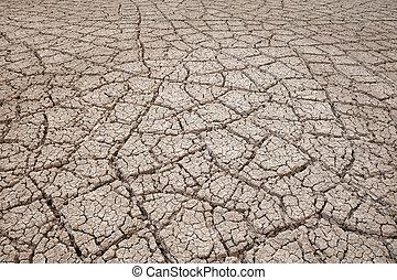 secado, lama rachada, planta