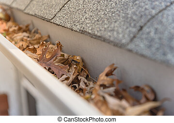 secado, otoño sale, escombros, tejas, américa, lleno,...