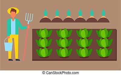 secchio, presa a terra, eco, cavolo, giardiniere, uomo, cappello, contadino, carota, rastrello, o, crescente, il portare