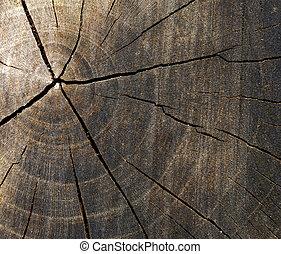 sección transversal, de, árbol