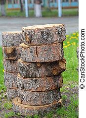 sección transversal, de, tronco de árbol, actuación, anillos anuales