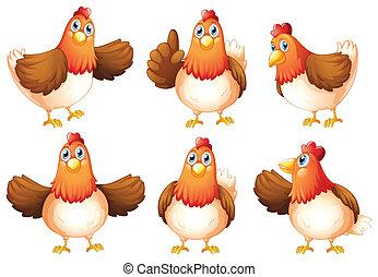 sechs, hühner, dicker