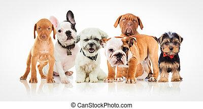 sechs, reizend, junger hund, hunden, von, verschieden, rassen, stehende , zusammen