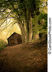 Secluded Cabin - Conceptual image of dirt path leading to...