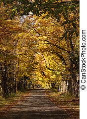 Secluded Narrow Lane Road Tree Leaves Autumn Season Fall Colors