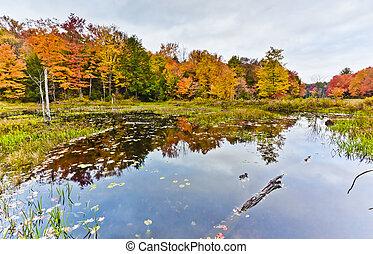 Secnic Fall Landscape