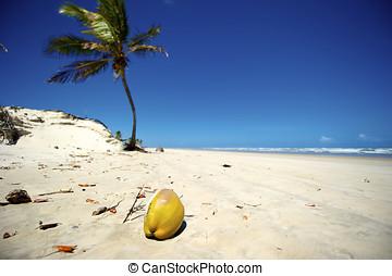seco, ブラジル, bahia, mangue