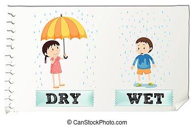 seco, adjectives, contrario, mojado