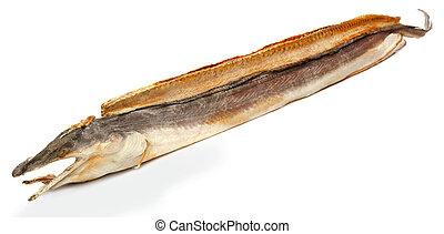 seco, anguila de moray