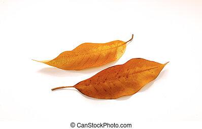 seco, conjunto, hojas, aislado, tropical, white.