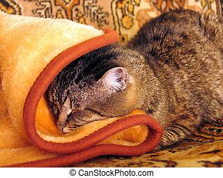 seco, hogar, gato