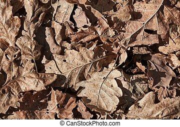 seco, hojas, piso bosque