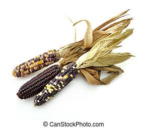 seco, maíz, colorido