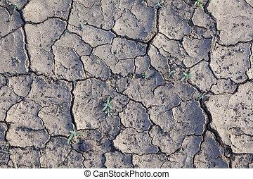 seco, marga, desierto