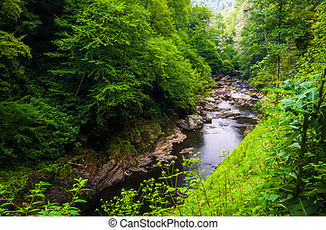 seco, nantahala, bosque nacional, debajo, bajas, río,...