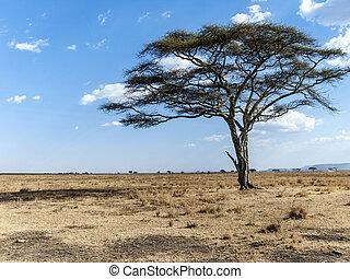 seco,  Serengeti, solo, árbol, desierto
