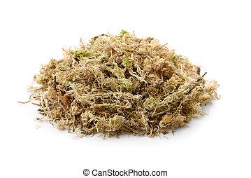 seco, sphagnum, pila, musgo