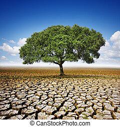 seco, tierra, árbol