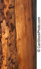 seco, tronco de árbol, en, su