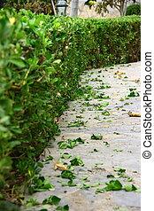 secondo, foglia, arbusto, potatura, suolo