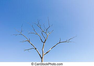 secos, árvore, sem, folhas, contra, céu azul