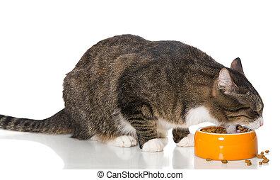 secos, cinzento, alimento, come, gato raiou