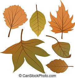 secos, collection., folhas, ilustração, outono, vetorial