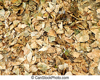 secos, folhas