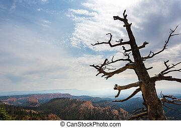secos, topo montanha, árvore
