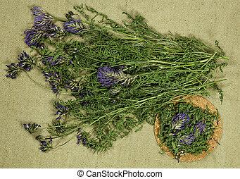 secos, uso, phytotherapy., erva, astragalus., medicina, alternativa