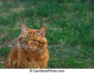 secours, chat, a, été, victime, cruelty., animal