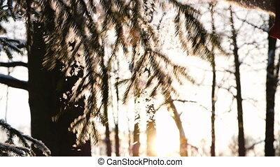 secousses, moufle, pelucheux, neige, motion main, battements, lent, femme, impeccable, long, branche