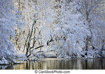 A lake hidden within the snowy winter forest.
